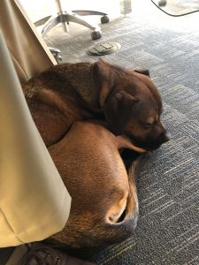 Rockne loves to make himself comfortable during meetings in the ClaimVantage offices