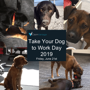 ClaimVantage pets boost staff morale and help to destress